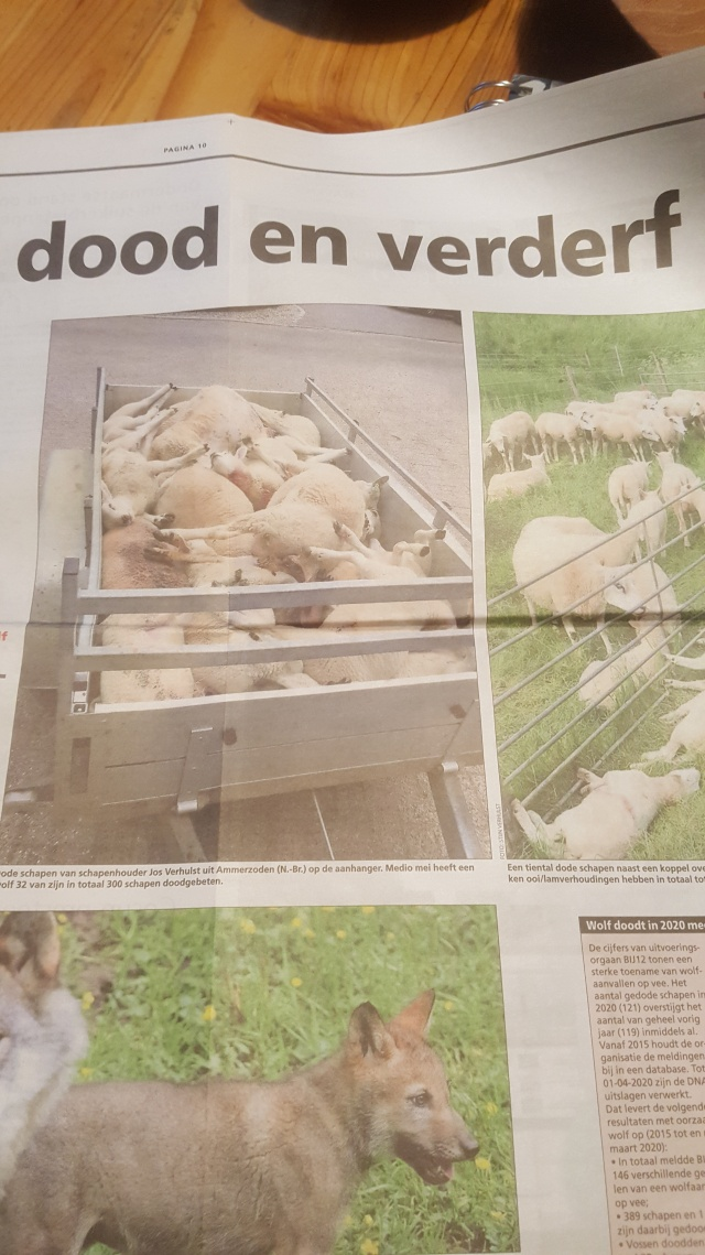 Wolven artikel Agr dagblad